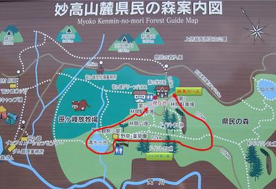 笹ヶ峰牧場-ドイツトウヒの森 探鳥コース.jpg